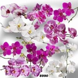 Toile cirée fleur violette